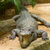 krokodil · güneş · hayvanat · bahçesi · doğa · cilt - stok fotoğraf © michaklootwijk