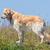 golden · retriever · bahçe · resim · genç · köpek · doğa - stok fotoğraf © michaklootwijk