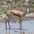 safari · park · Namibya · doğa · seyahat · et - stok fotoğraf © michaklootwijk