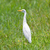 preto · língua · grama · pássaro · boca - foto stock © michaklootwijk