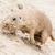préri · kutya · természetes · élőhely · fű · természet - stock fotó © michaklootwijk