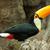 madár · színes · Brazília · fa · természet · zöld - stock fotó © michaklootwijk