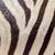 zebra · portret · baby · afrikaanse · milieu - stockfoto © michaklootwijk