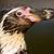 pingvin · állatkert · Barcelona · kő · Európa · fotózás - stock fotó © michaklootwijk