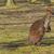 mocsár · ül · bokor · sziget · fű · kenguru - stock fotó © michaklootwijk