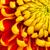mooie · dahlia · bloem · zomer · tuin · tuinieren - stockfoto © michaklootwijk