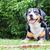 bekleme · patron · oynamak · genç · köpek · mutlu - stok fotoğraf © michaklootwijk