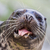sea lion closeup stock photo © michaklootwijk