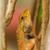 masculino · areia · lagarto · em · pé · madeira - foto stock © michaklootwijk