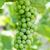 yeşil · hamamböceği · meyve · ağaç · doğa · bitki - stok fotoğraf © michaklootwijk
