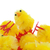 Abundance of easter chicks, selective focus stock photo © michaklootwijk