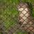 Otter in captivity stock photo © michaklootwijk