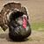 férfi · fekete · legelő · vad · madár · természetes - stock fotó © michaklootwijk