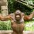 orangutan · Vietnam · borneo · maymun · koruma · poz - stok fotoğraf © michaklootwijk