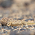 camaleão · caça · deserto · Namíbia · olhos · areia - foto stock © michaklootwijk