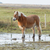 horse standing in a pool after days of raining stock photo © michaklootwijk