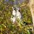 ring tailed lemur lemur catta stock photo © michaklootwijk