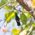 kolibri · repülés · elszigeteltség · madár · árnyék · gyors - stock fotó © michaklootwijk