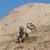 közelkép · kutya · préri · kövér · állat · alagút - stock fotó © michaklootwijk