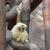 Alone monkey stock photo © michey