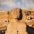 ピラミッド · 大スフィンクス · 高原 · カイロ · エジプト · 顔 - ストックフォト © mikdam