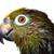 verde · papagaio · colorido · amarelo · sessão · ramo - foto stock © mikdam