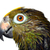 amazona · papagaio · animal · animais · de · estimação · fundo · branco - foto stock © mikdam