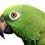amazon parrot stock photo © mikdam
