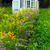 invernadero · cultura · flores · agricultura · industria · vidrio - foto stock © mikdam