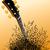 boom · muziek · merkt · vector · muziek · liefde · hart - stockfoto © mike301
