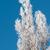 冬 · ツリー · カバー · 暗い · 青空 - ストックフォト © mikhail_ulyannik