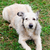 cão · sessão · grama · natureza · retrato · animais - foto stock © mikhail_ulyannik