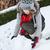 teenager girl making snowman stock photo © miklav