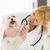veeartsenijkundig · verpleegkundige · dieren · vrouw · arts · vrouwen - stockfoto © milanmarkovic78