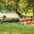fitness · vrouw · plank · natuur · opleiding · kern - stockfoto © milanmarkovic78