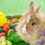 coelhinho · da · páscoa · ovos · de · páscoa · grama · branco · páscoa · primavera - foto stock © milanmarkovic78