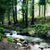 forest stream stock photo © mironovak