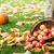 automne · récolte · jardin · citrouille · fruits · coloré - photo stock © mobi68
