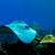 рыбы · мелкий · пляжей · выстрел - Сток-фото © mojojojofoto