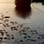 漁船 · 川 · 写真 · 水 · 木材 - ストックフォト © mojojojofoto