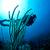 mergulho · mulher · molhado · terno · máscara - foto stock © mojojojofoto