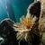 cső · kukac · sekély · meleg · víz · tenger - stock fotó © MojoJojoFoto