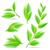 зеленый · чай · листьев · вектора · реалистичный · иллюстрация · изолированный - Сток-фото © moleks