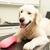 hond · tabel · veeartsenijkundig · chirurgie · vrouwelijke · persoon - stockfoto © monkey_business
