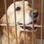 golden · Retriever · Hund · Käfig · Veterinär- · Chirurgie - stock foto © monkey_business
