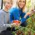 kadın · hasat · domates · bahçıvanlık · taze · bahçe - stok fotoğraf © monkey_business