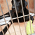 dog in cage recovering from foot injury stock photo © monkey_business