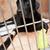kutya · bandázs · mancs · gyönyörű · orvosi · egészség - stock fotó © monkey_business
