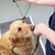 veterinary nurse weighing dog in surgery stock photo © monkey_business