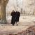 зима · ходьбы · морозный · пейзаж · человека - Сток-фото © monkey_business